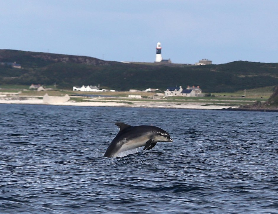 Dolphins put on a display in Church Bay, Rathlin Island